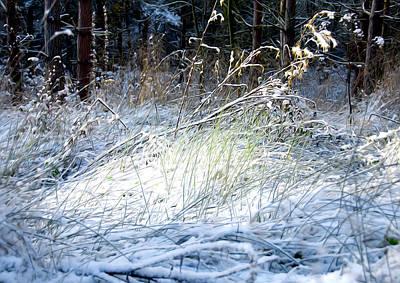 Frozen Grass Print by Svetlana Sewell