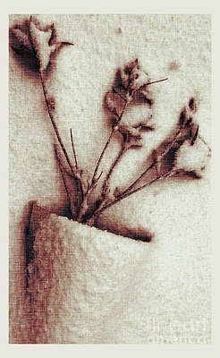 Winter Photograph - Frozen No.1 by Anne Roy
