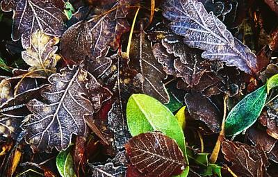 Forest Floor Photograph - Frozen Oak Leaves, Glenveagh National by Gareth McCormack