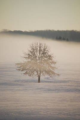 Ice Fog Photograph - Frozen  by Peter  McIntosh