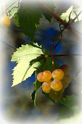 Fruit Of The Vine Vignetted Print by Suzanne Gaff