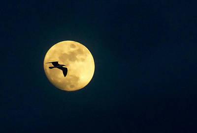 Full Moon With Bird Original by Allan Einhorn