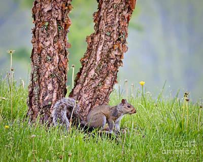 Wildflower Photograph - Fun In The Rain by Kerri Farley