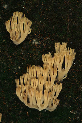 Fungi Grows Out Of A Fallen Log In An Print by Michael S. Quinton
