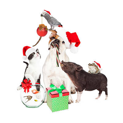 Goldfish Photograph - Funny Christmas Pet Compositie by Susan Schmitz