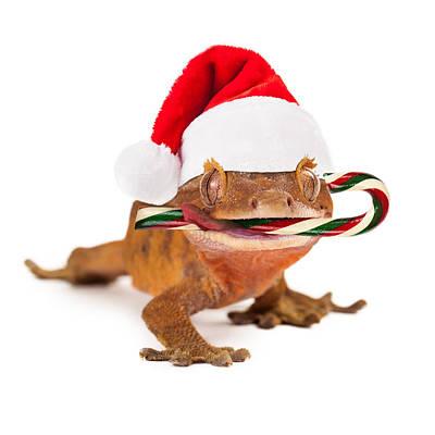 Funny Lizard Eating Christmas Candy Cane Print by Susan Schmitz