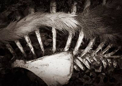Fur And Bones Print by JoAnn Lense