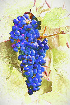 Wine Photograph - Future Vino by Marcia Colelli