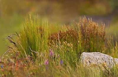 Fynbos Reeds Original by Basie Van Zyl