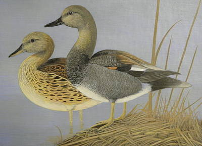 Stamps Drawing - Gadwall Duck Pair On Grass by Alan Suliber