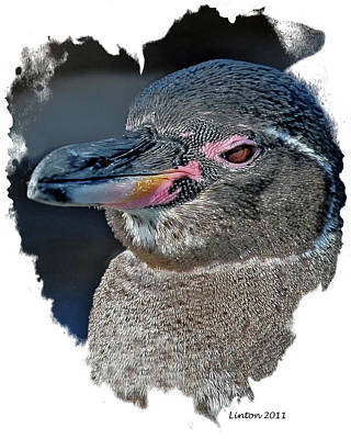 Penguin Digital Art - Galapagos  Penguin by Larry Linton