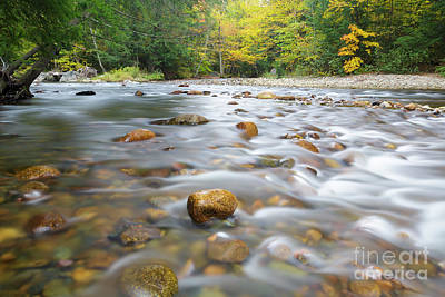 Gale River - Franconia New Hampshire  Print by Erin Paul Donovan