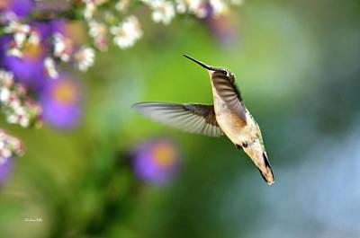 Garden Hummingbird Print by Christina Rollo