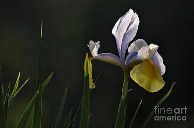 Flower Photograph - Garden Orchid And Leaves by Angelo DeVal