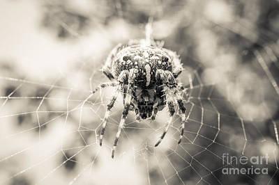 British Garden Orb Spider Photograph - Garden Spider 2 by Marcin Rogozinski