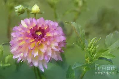 Photograph - Garden Variety Dahlia by Lois Bryan