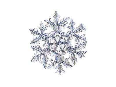 Snow Photograph - Gardener's Dream, White Version by Alexey Kljatov