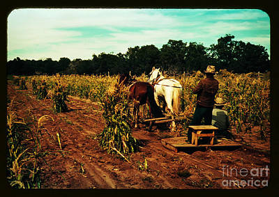 Corn Painting - Gathering Corn In The Field by Celestial Images