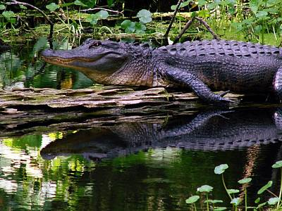 Aligator Photograph - Gator On The River by Kimberly Camacho