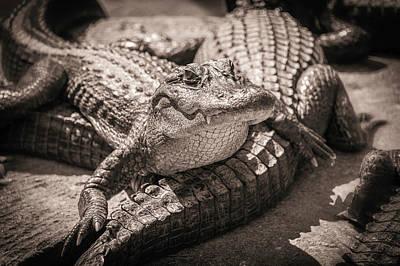 Aligator Photograph - Gator by Scott Mullin