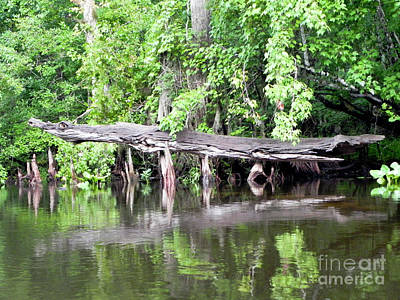 Gator Stump Print by Jack Norton