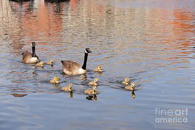 Geese And Goslings 3 Original by John Chatterley
