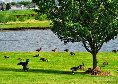 Geese Getting Some Shade II Print by Don Baker
