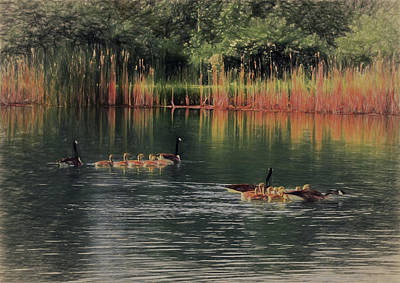 Geese With Babies Print by Ron Grafe