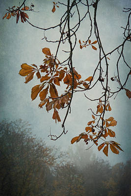 Fall Leaves Photograph - Gentle Fall  by Maggie Terlecki