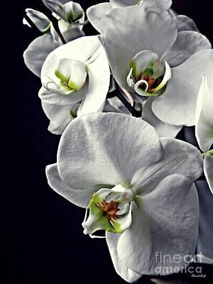 Orchids Digital Art - Gentle Silence   by Sarah Loft