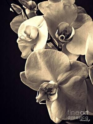 Orchids Digital Art - Gentle Silence Sepia by Sarah Loft