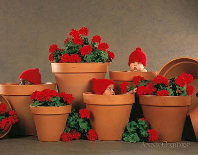 Red Geranium Photograph - Geranium Pots by Anne Geddes
