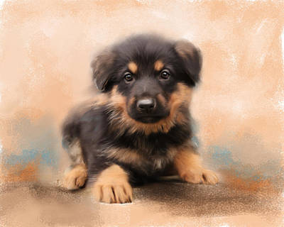 German Shepherd Puppy Portrait Print by Jai Johnson