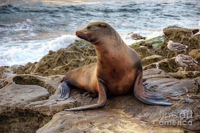 California Wildlife Photograph - Get My Good Side by Eddie Yerkish