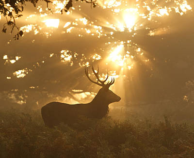 Golden Light Photograph - Ghost Of The Forest by Greg Morgan
