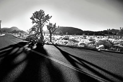 Joshua Tree Photograph - Ghouls by Laurie Search