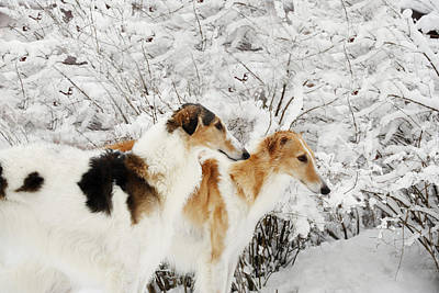 giant Borzoi hounds in winter Print by Christian Lagereek