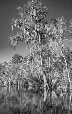Alligator Drawing - Giant Cypress 2 - Bw by Steve Harrington