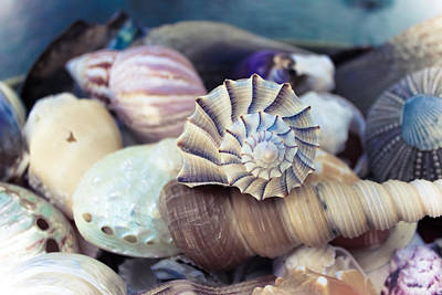 Gifts From The Sea Print by Colleen Kammerer
