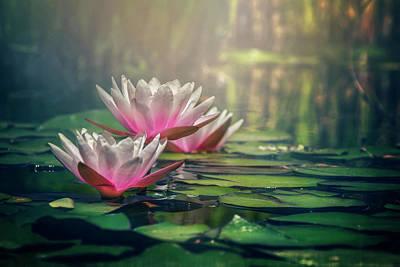 Botanic Photograph - Gilding The Lily by Carol Japp