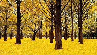 Ginkgo Trees In Autumn Print by Movie Poster Prints