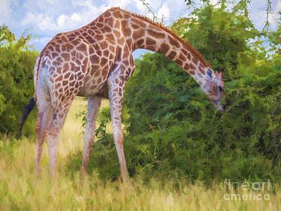 Giraffe Digital Art - Giraffe Browsing by Liz Leyden