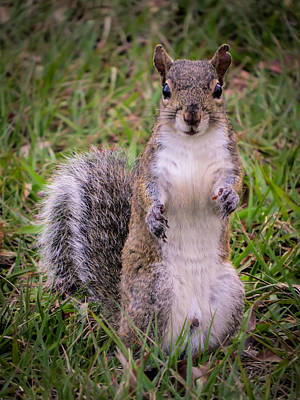 Squirrel Photograph - Give Me Your Paw by Zina Stromberg