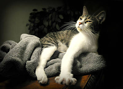 Gray Tabby Photograph - Higgins by Diana Angstadt