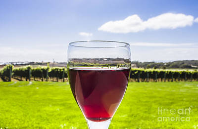 Winery Photograph - Glass Of Red Merlot Wine. Wineries And Vineyards by Jorgo Photography - Wall Art Gallery