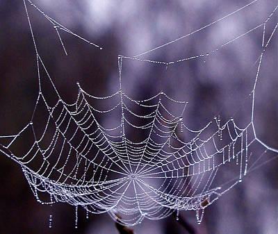 Glistening Web Print by Karol Livote