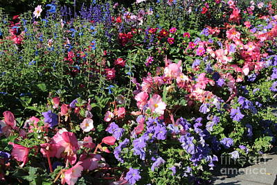 Blue Begonia Photograph - Glorious Garden by Carol Groenen