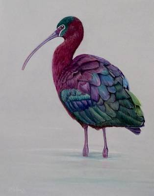 Ibis Drawing - Glossy Ibis by Michelle McAdams