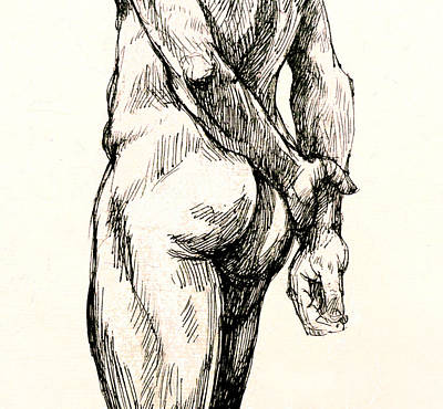 Male Nude Drawing Drawing - Gluteus Maximus by Roz McQuillan