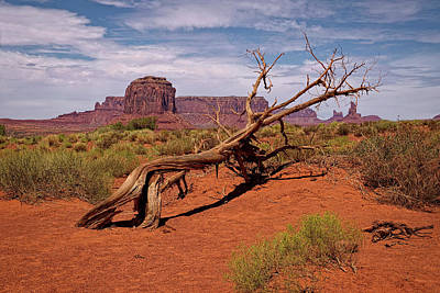 Tree Photograph - Gnarled Beauty Of The Valley by Lucinda Walter